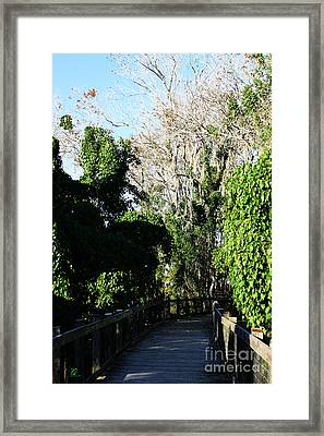 Framed Print featuring the photograph Lake Apopka Boardwalk by Chris Thomas