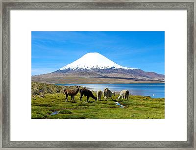 Lake Chungara Chilean Andes Framed Print