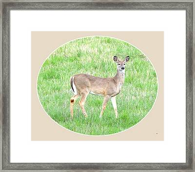 Lake Country Doe   Framed Print by Will Borden