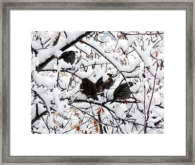 Lake Country Quail Framed Print by Will Borden