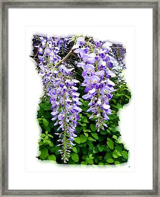 Lake Country Wisteria Framed Print by Will Borden