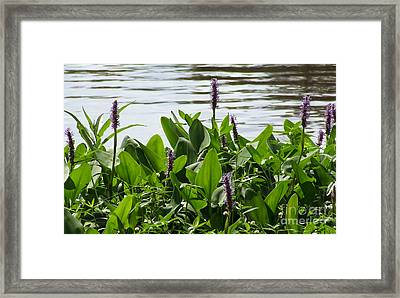Lake Day Framed Print by Andrea Anderegg