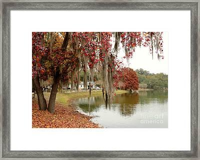 Lake Ella In Tallahassee Framed Print by Carol Groenen