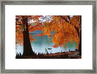 Lake Ella Morning Framed Print