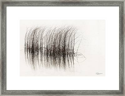 Lake Grasses Framed Print