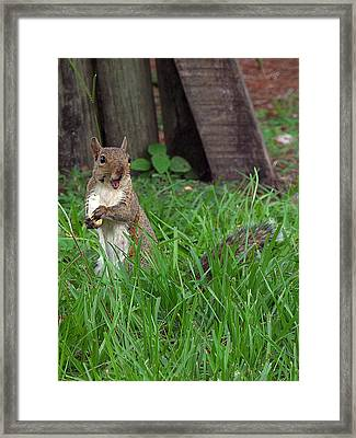 Framed Print featuring the photograph Lake Howard Squirrel 000 by Chris Mercer