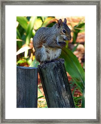 Framed Print featuring the photograph Lake Howard Squirrel 019 by Chris Mercer