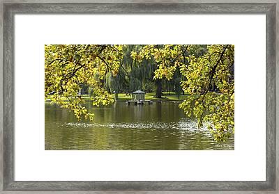 Lake In Boston Park Framed Print by Alex King