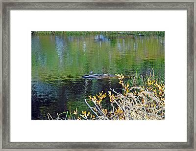 Lake Irene In Autumn Study 13-5 Framed Print