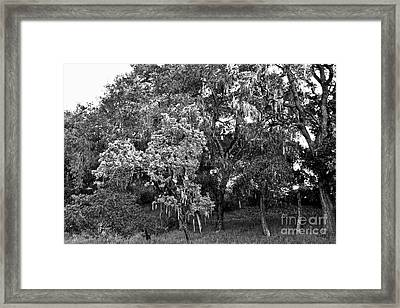 Framed Print featuring the photograph Lake Lopez Oaks Bw    by Gary Brandes