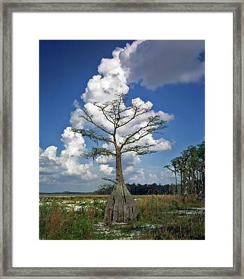 Lake Louisa. Framed Print
