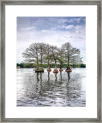 Lake Maitland Cypress Framed Print by Anthony Festa