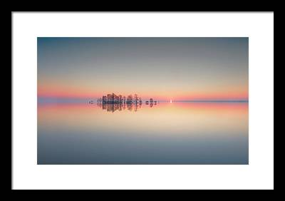 Bald Cypress Photographs Framed Prints