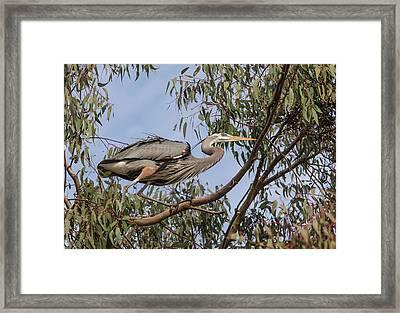 Lake Murray San Diego, California Male Framed Print by Michael Qualls
