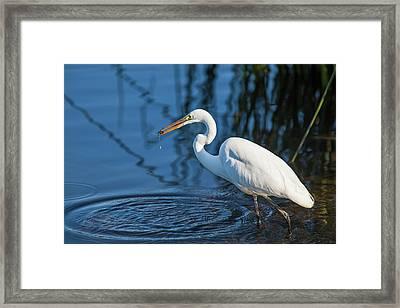 Lake Murray, San Diego, California Framed Print by Michael Qualls