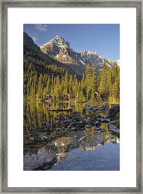 Lake Ohara, Yoho National Park, British Framed Print by Peter Carroll