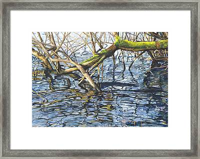 Lake Padden - View From The Memorial Bench Of Christina And Edwin White Framed Print