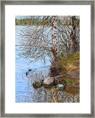Lake Padden - View Near Scott Memorial Bench Framed Print