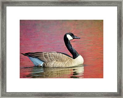 Lake Placid Framed Print by Fraida Gutovich
