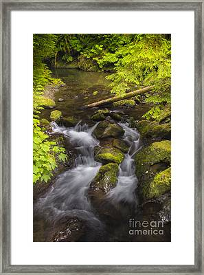 Lake Quinault Creek 2 Framed Print