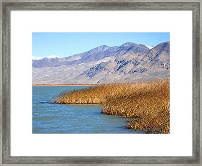 Lake Reeds Framed Print