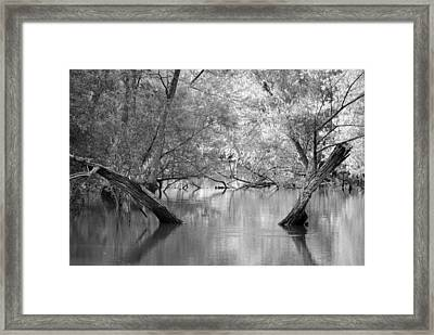 Lake Reflections Framed Print by Misty Stach