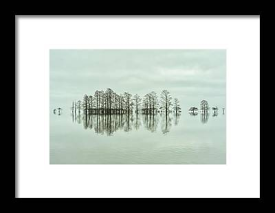 Bald Cypress Framed Prints