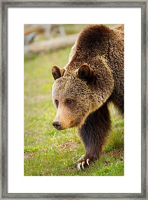 Framed Print featuring the photograph Lake Grizzly by Aaron Whittemore