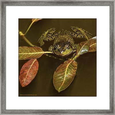 Lake Tahoe California Bullfrog Framed Print by LeeAnn McLaneGoetz McLaneGoetzStudioLLCcom