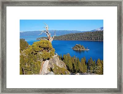 Lake Tahoe Reaching Tree Framed Print