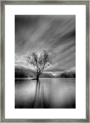 Lake Tree Mon Framed Print