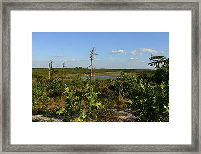 Lake View II. Lake Wales Ridge. Framed Print by Chris  Kusik
