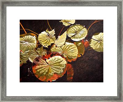 Lake Washington Lily Pad 11 Framed Print
