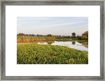 Lake With Aquatic Plants In The Danube Framed Print by Martin Zwick