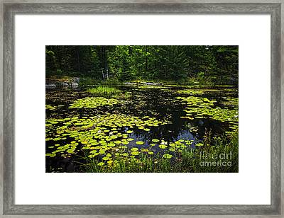 Lake With Lily Pads Framed Print by Elena Elisseeva