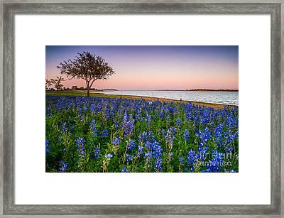 Lakeside Texas Bluebonnets - Wildflower Field In Lake Somerville Framed Print by Ellie Teramoto