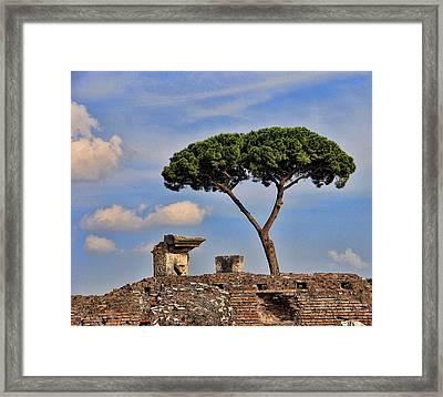 L'albero Framed Print