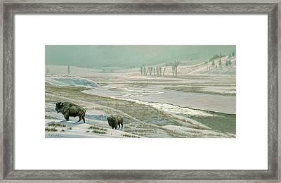 Lamar Valley - Bison Framed Print by Paul Krapf