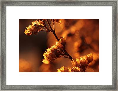 Lamp Lighter Framed Print by Connie Handscomb