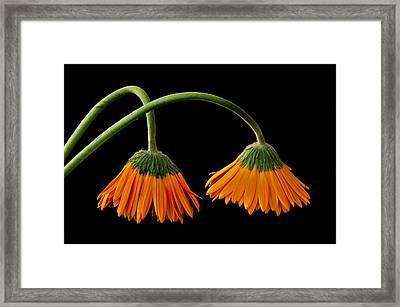 Framed Print featuring the photograph Lamp - Like Flowers by Marwan Khoury