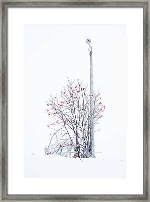 Lamp Post Framed Print by Jakub Sisak