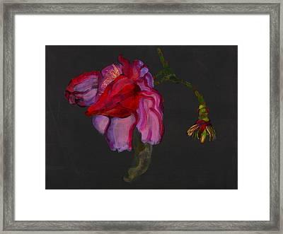 Lanarth Magnolia Framed Print by Deborah Barton