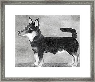 Lancashire Heeler Dog Portrait  Framed Print by Olde Time  Mercantile