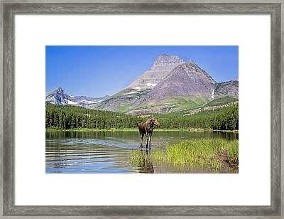 Land Of The Moose Framed Print by Jack Bell