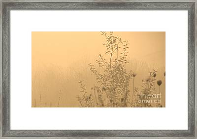 Land Of Wildness Framed Print