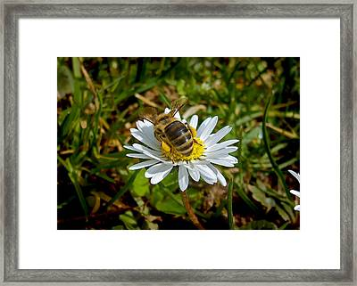 Landed Framed Print by Nina Ficur Feenan