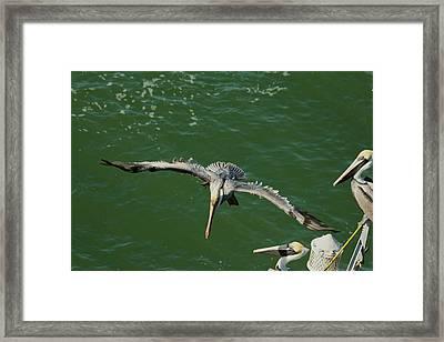 Landing Framed Print by Frederic Vigne