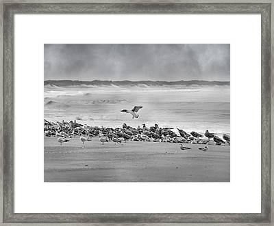 Landing In A Blur Framed Print by Betsy Knapp