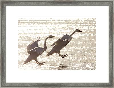 Framed Print featuring the photograph Landing by Inge Riis McDonald