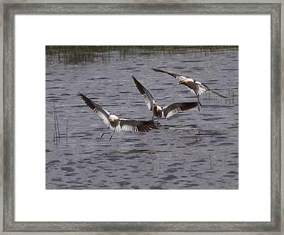 Landing Framed Print by Jenessa Rahn